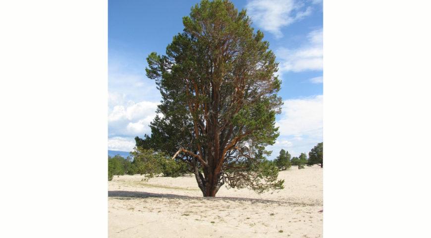 180404-00-tree