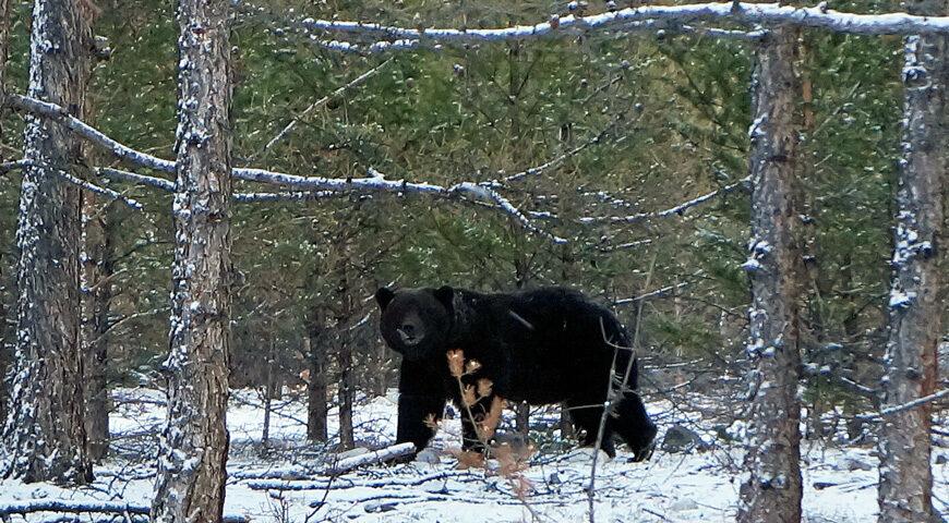 190403-1-00-bear
