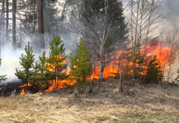 190430-1-00-forest-fire