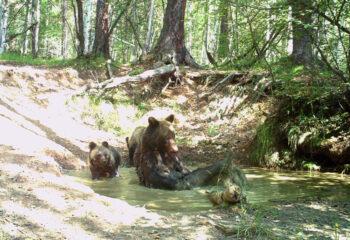 190606-1-00-bears-in-spa-saloon