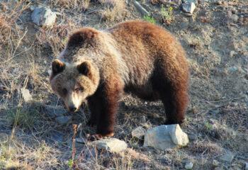 190617-2-00-bear