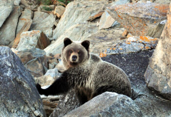 200409-1-00-bear