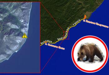 200801-1-00-dangerous-bear