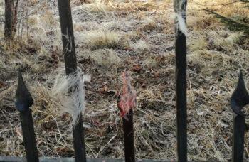 201112-2-00-roe-deer-is-died