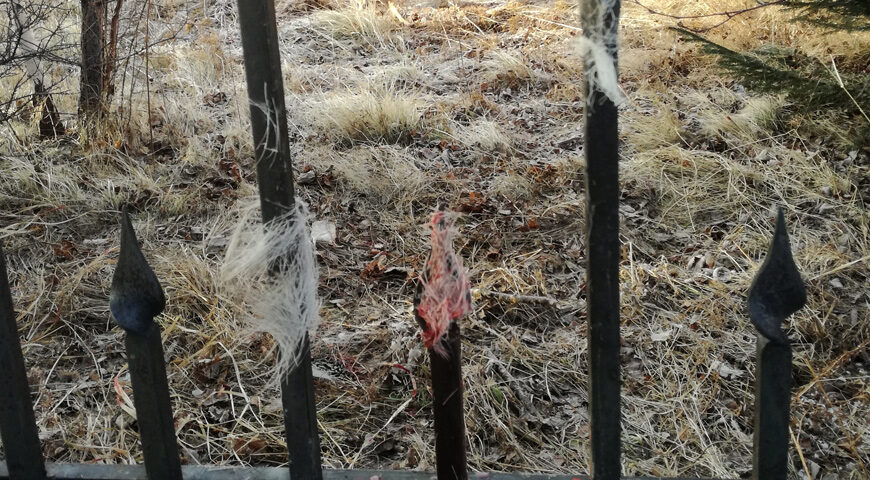 201112-2-00-roe-deer-is-died
