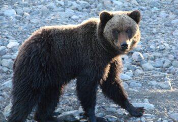 21-04-12-medved