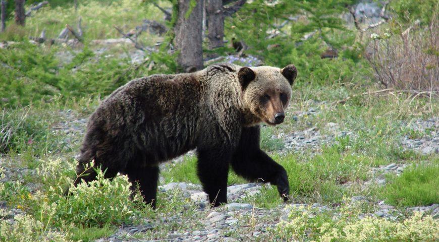 21-09-24-bear