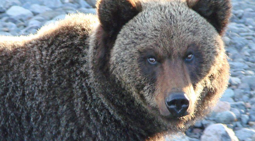 21-10-05-bear